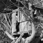 Building a Tree house